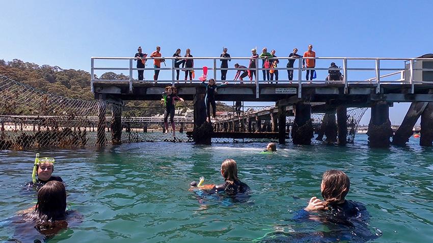 snorkelling chowder bay