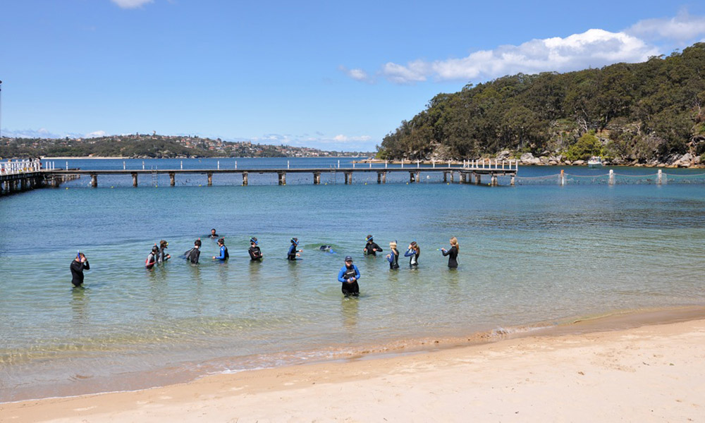 sydney foreshore - unique marine environment for school programming